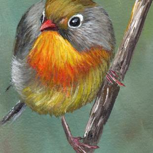 Art: Red Billed Leiothrix ACEO by Artist Janet M Graham