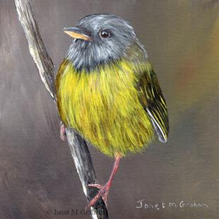 Art: Mourning Warbler by Artist Janet M Graham