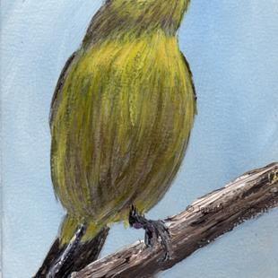 Art: Tickell's Leaf Warbler ACEO by Artist Janet M Graham