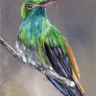 Art: Rufous Tailed Hummingbird ACEO by Artist Janet M Graham