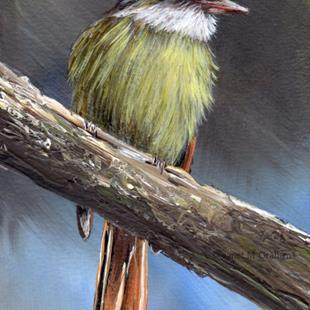 Art: Rufous Tailed Flycatcher ACEO by Artist Janet M Graham