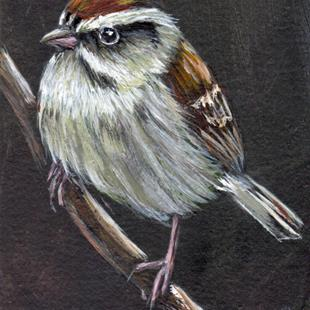 Art: Chipping Sparrow ACEO by Artist Janet M Graham