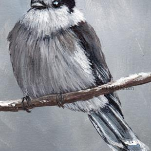 Art: Gray Jay ACEO by Artist Janet M Graham