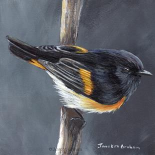 Art: American Redstart by Artist Janet M Graham