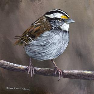 Art: White Throated Sparrow by Artist Janet M Graham
