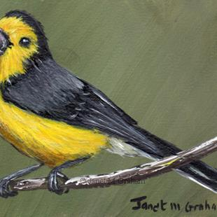 Art: Golden Fronted Redstart ACEO by Artist Janet M Graham