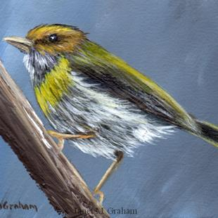 Art: Rufous Faced Warbler ACEO by Artist Janet M Graham