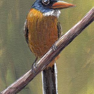 Art: Green Backed Kingfisher ACEO by Artist Janet M Graham