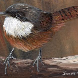 Art: Canyon Wren ACEO by Artist Janet M Graham