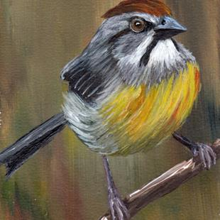 Art: Zapata Sparrow ACEO by Artist Janet M Graham