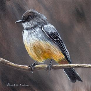 Art: Say's Phoebe by Artist Janet M Graham