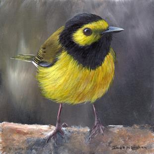 Art: Hooded Warbler No 2 by Artist Janet M Graham