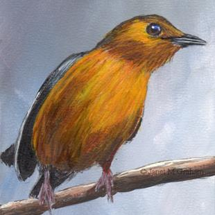 Art: Red Capped Robin Chat ACEO by Artist Janet M Graham