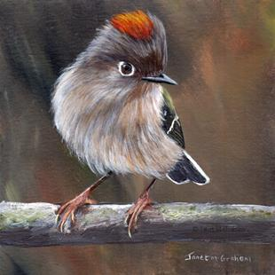Art: Ruby Crowned Kinglet No 5 by Artist Janet M Graham