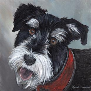 Art: Miniature Schnauzer by Artist Janet M Graham