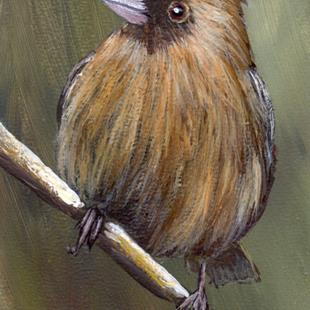 Art: Abert's Towhee ACEO by Artist Janet M Graham