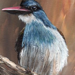 Art: Blue Breasted Kingfisher ACEO by Artist Janet M Graham