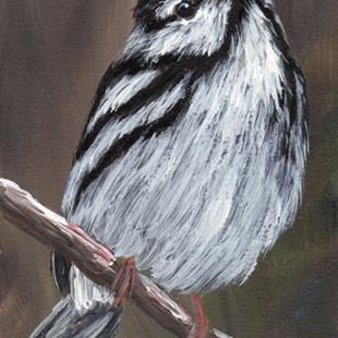 Art: Blackpoll Warbler ACEO by Artist Janet M Graham