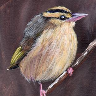 Art: Worm Eating Warbler ACEO by Artist Janet M Graham