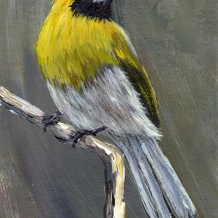 Art: Black Faced Grosbeak ACEO by Artist Janet M Graham