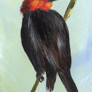 Art: Scarlet Headed Blackbird ACEO by Artist Janet M Graham