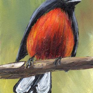 Art: Slate Throated Redstart ACEO by Artist Janet M Graham