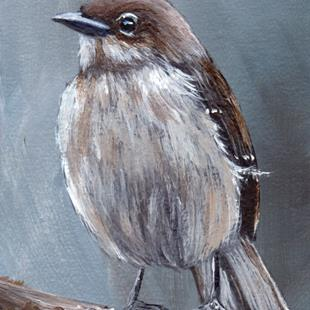 Art: Northern Mockingbird ACEO by Artist Janet M Graham