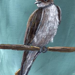 Art: Northern Rough winged Swallow ACEO by Artist Janet M Graham