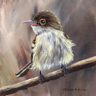 Art: Acadian Flycatcher by Artist Janet M Graham