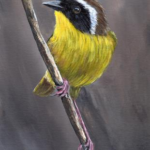 Art: Common Yellowthroat No 4 by Artist Janet M Graham
