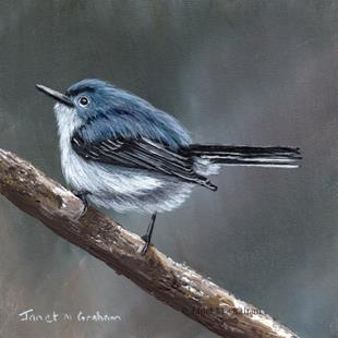 Art: Blue Gray Gnatcatcher No 3 by Artist Janet M Graham