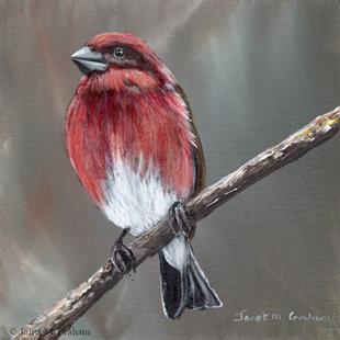 Art: Purple Finch by Artist Janet M Graham