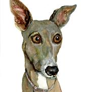 Art: GREYHOUND BALLOU by Dawn Barker