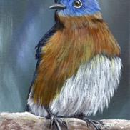 Art: Eastern Bluebird No 3 by Janet M Graham
