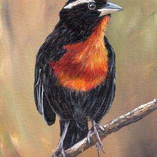 Art: White Browed Blackbird by Artist Janet M Graham
