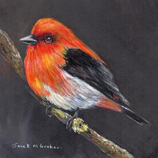 Art: Scarlet Tanager No 2 by Artist Janet M Graham