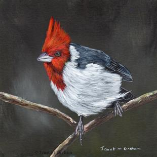 Art: Red Crested Cardinal by Artist Janet M Graham