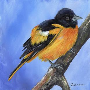 Art: Baltimore Oriole by Artist Janet M Graham