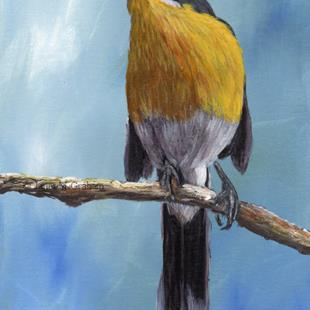 Art: Yellow Breasted Chat by Artist Janet M Graham