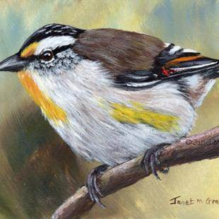Art: Striated Pardalote by Artist Janet M Graham