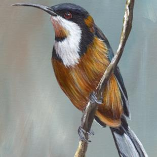 Art: Eastern Spinebill by Artist Janet M Graham