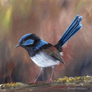 Art: Superb Fairy Wren No 14 by Artist Janet M Graham