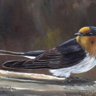 Art: Welcome Swallow by Artist Janet M Graham