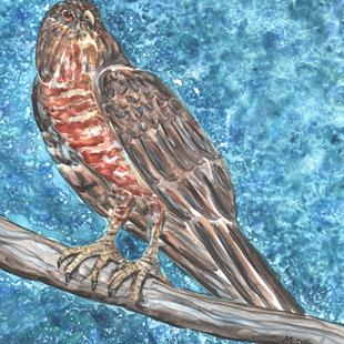Art: Hawk Impression by Artist Melinda Dalke