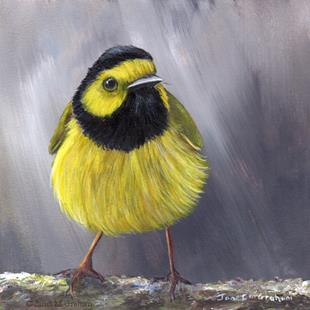 Art: Hooded Warbler No 3 by Artist Janet M Graham
