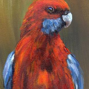 Art: Crimson Rosella ACEO by Artist Janet M Graham