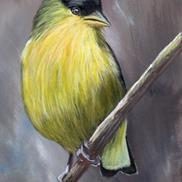 Art: Lesser Goldfinch No 3 by Janet M Graham