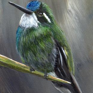 Art: White Throated Mountain Gem ACEO by Artist Janet M Graham