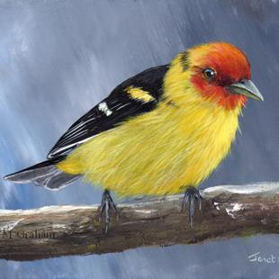 Art: Western Tanager No 5 by Artist Janet M Graham