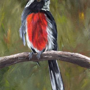Art: Red Breasted Chat by Artist Janet M Graham